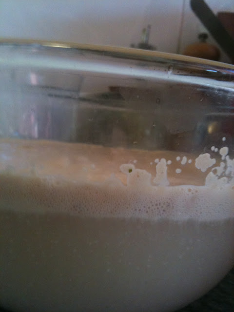 side view - proofed yeast