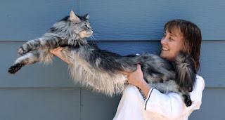 Muerte del gato más largo del mundo