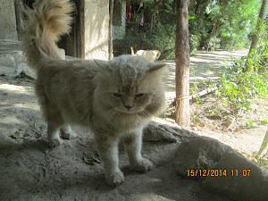 "Monday(15-12-2014) :- Is this tomcat ""Matata"" or ""Snowbell"" of Rann Riders resort ?"