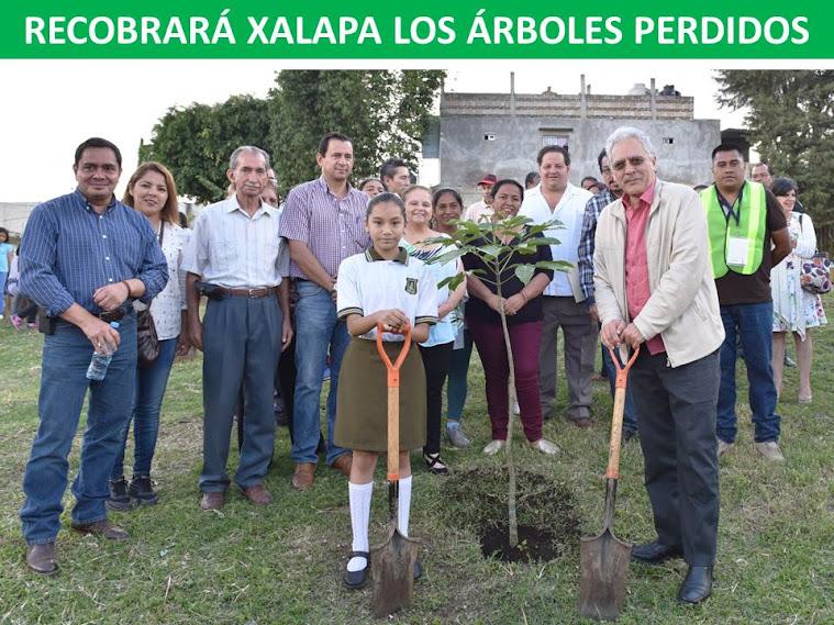 RECOBRARÁ XALAPA LOS ÁRBOLES PERDIDOS