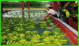 Japan looks to expand Sri Lanka's banana and fishing industries
