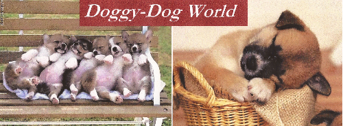 Doggy-Dog World