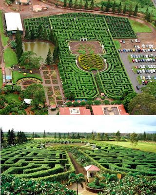 Pineapple Garden Maze (Hawaii)