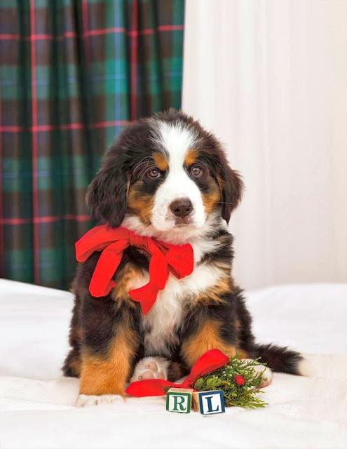 Christmas Ralph Lauren 2013