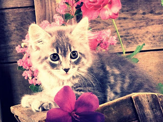 gatos wallpaper