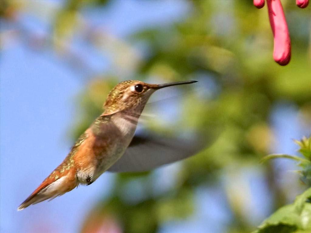 hình nền những chú chim đẹp nhất