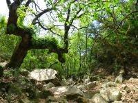 Parque Natural de los Alcornocales. Cádiz Diferente.