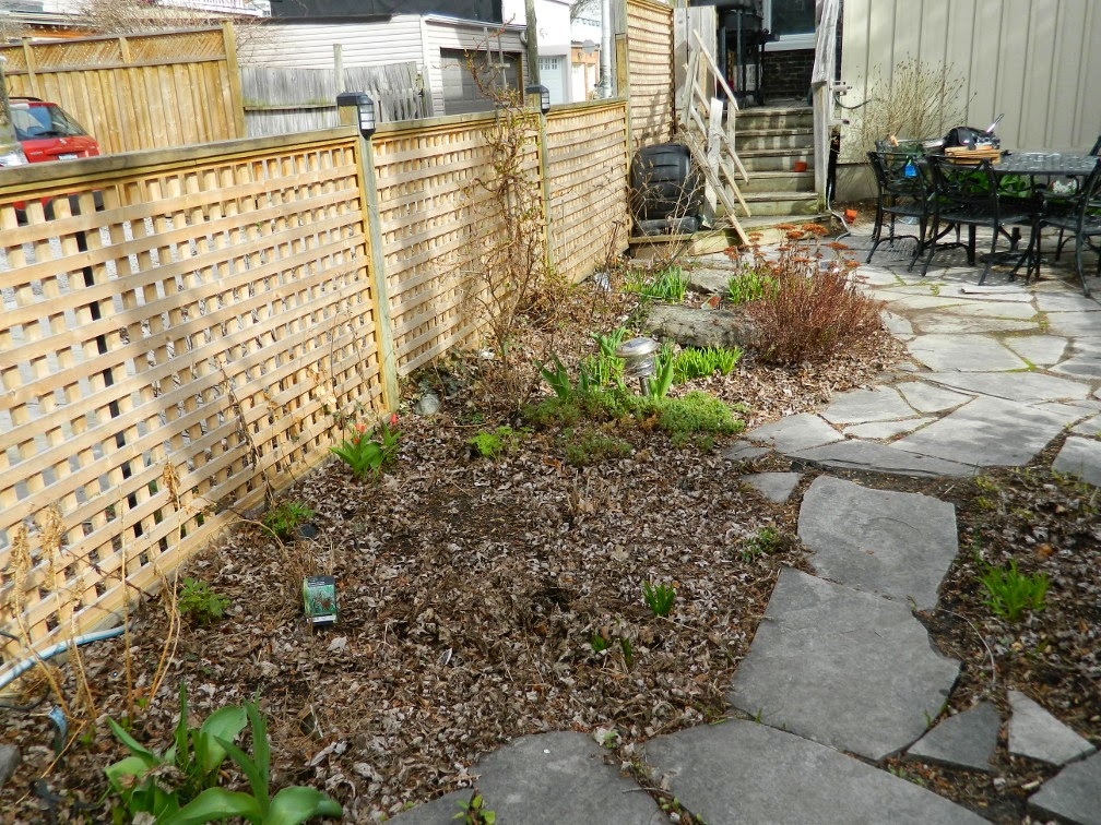 Paul Jung Gardening Services Toronto Leslieville spring garden clean up before
