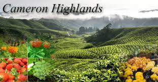 Shaklee Cameron highland;