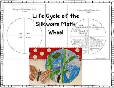 First Class Teacher: Silkworm Life Cycle Wheels