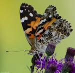 Photographs of Flower Hill Farm Fauna