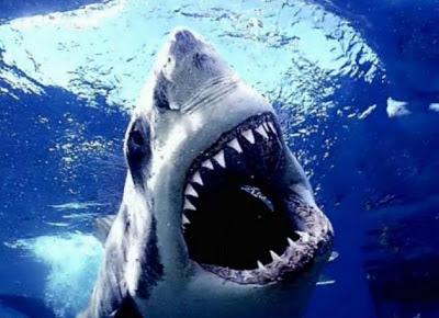 Köpekbalığı Balık Gerçekler Ve Son Resimler 2.013