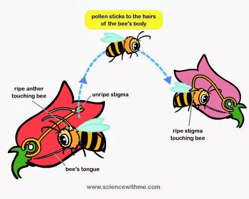 Animals Pollinating Plants Kids