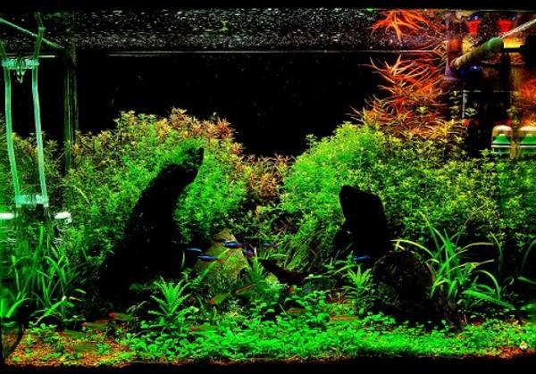 Nature Aquarium: Learn To Set Up Your Nature Aquarium