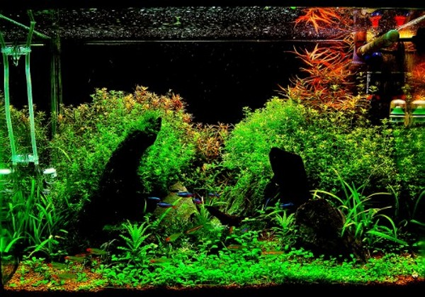 Aquarium My Ar T Chitectural Design Studio