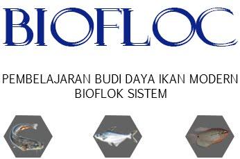 Pembelajaran Budi Daya Ikan Modern Bioflok Sistem