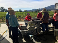 Napa Valley Harvest Trip 2015