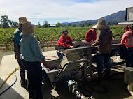 Napa Valley Harvest Trip 2015