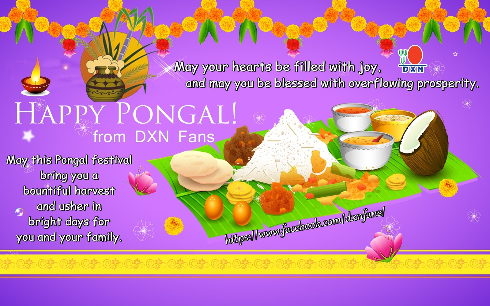 Welcome To The Dxn Fans Blog Pongal Greetings
