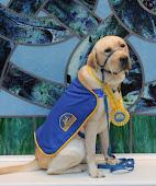 CCI Puppy #2  Hobart II