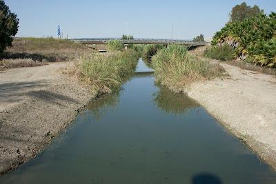 Autovía Jerez - Arcos. Puente sobre el Salado. (septiembre 2011)
