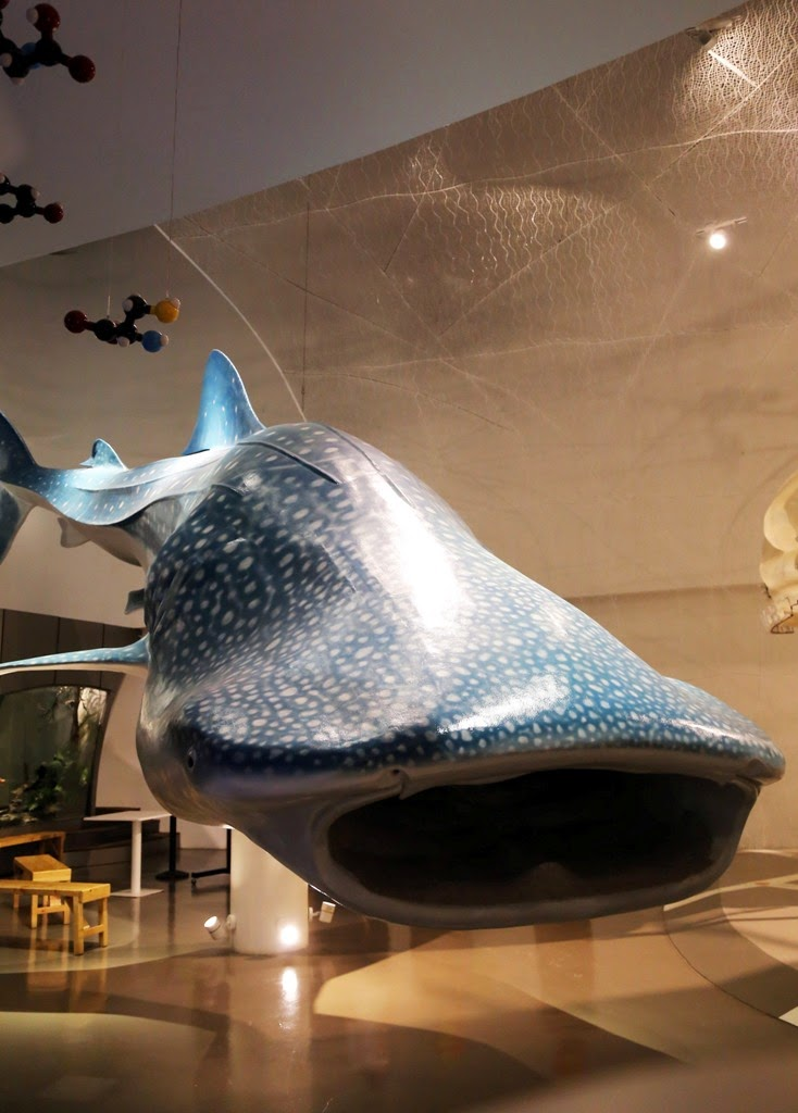 whale shark at The Mind Museum