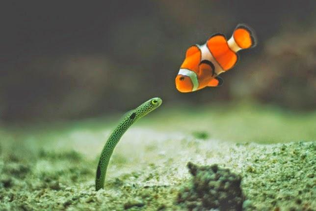 Fantásticas fotografías de animales
