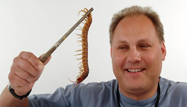 http://3.bp.blogspot.com/-dhTrRj4rE2c/ThkNIuPVxvI/AAAAAAAAVAk/dz4J-WZN-Lo/s1600/Large_Centipede_Found_in_UK.jpg