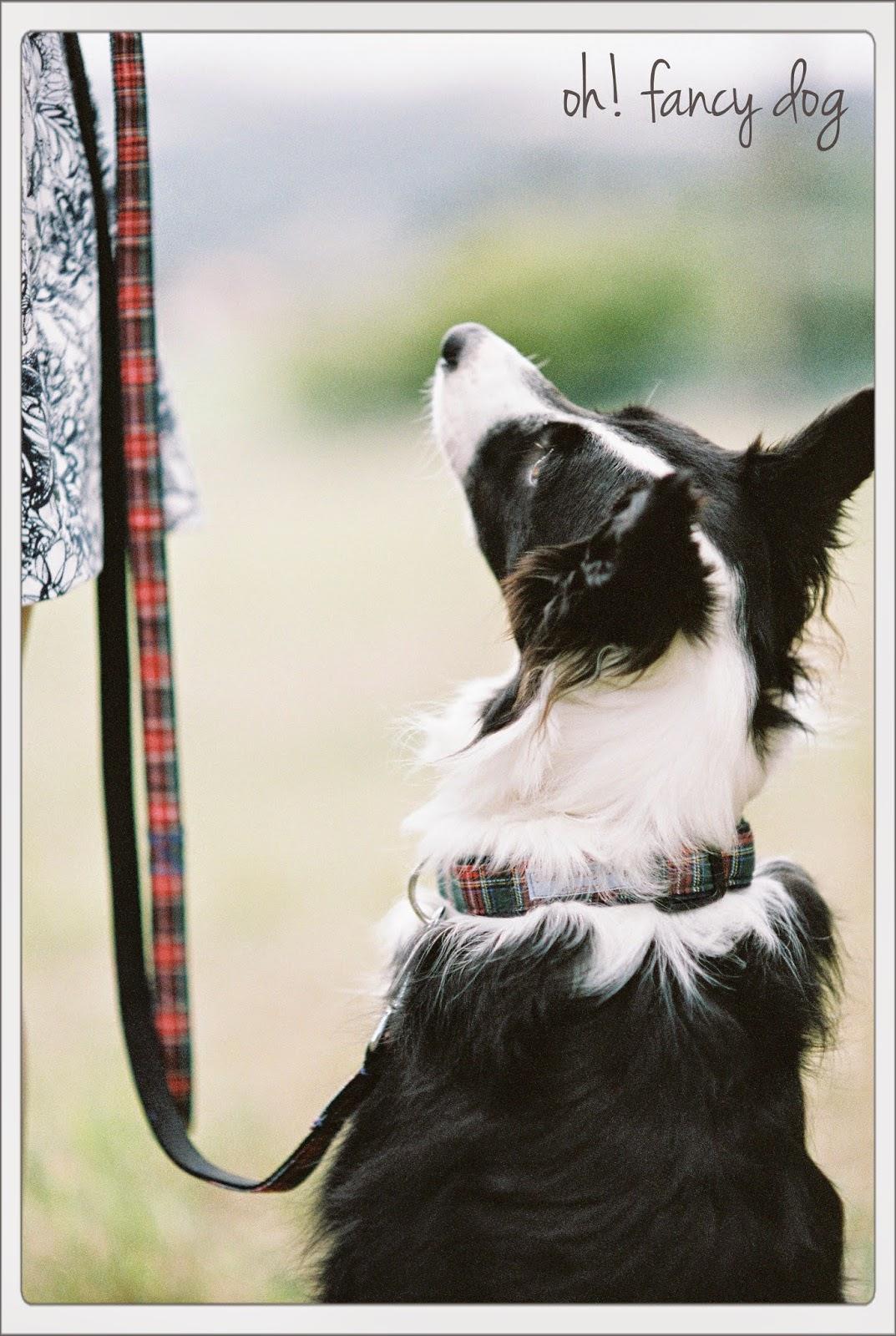 collares y correas hechas a mano para perro por oh! fancy dog
