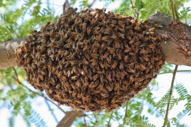 5 Jenis Serangga Paling Seram Di Dunia