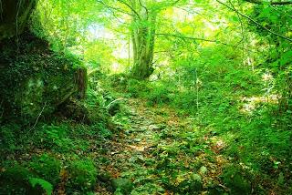 Lena, bosque Mofusu