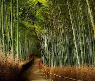 Hutan Ini Bambu Yang Melantunkan Melodi Merdu dari daniel maulana