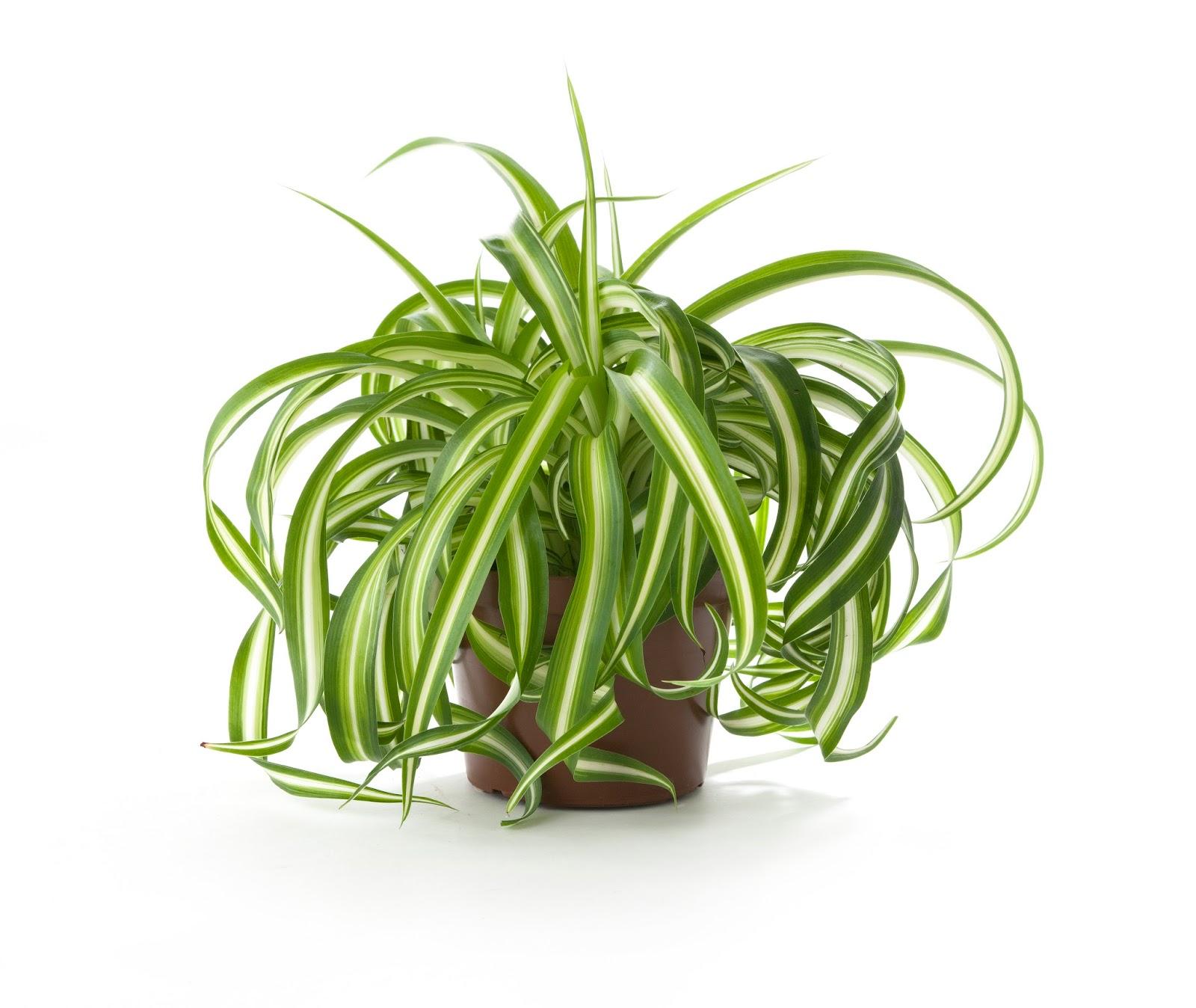 12 Plantas Que Limpian Y Purifican El Aire De Tu Hogar Hola  ~ Plantas Que Limpian El Ambiente
