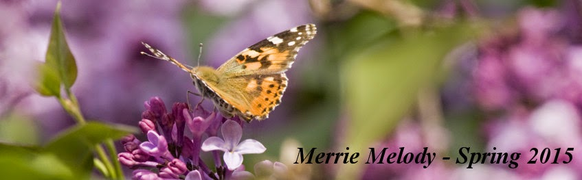 Merrie Melody