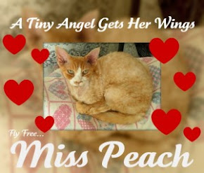 Forever, Miss Peach