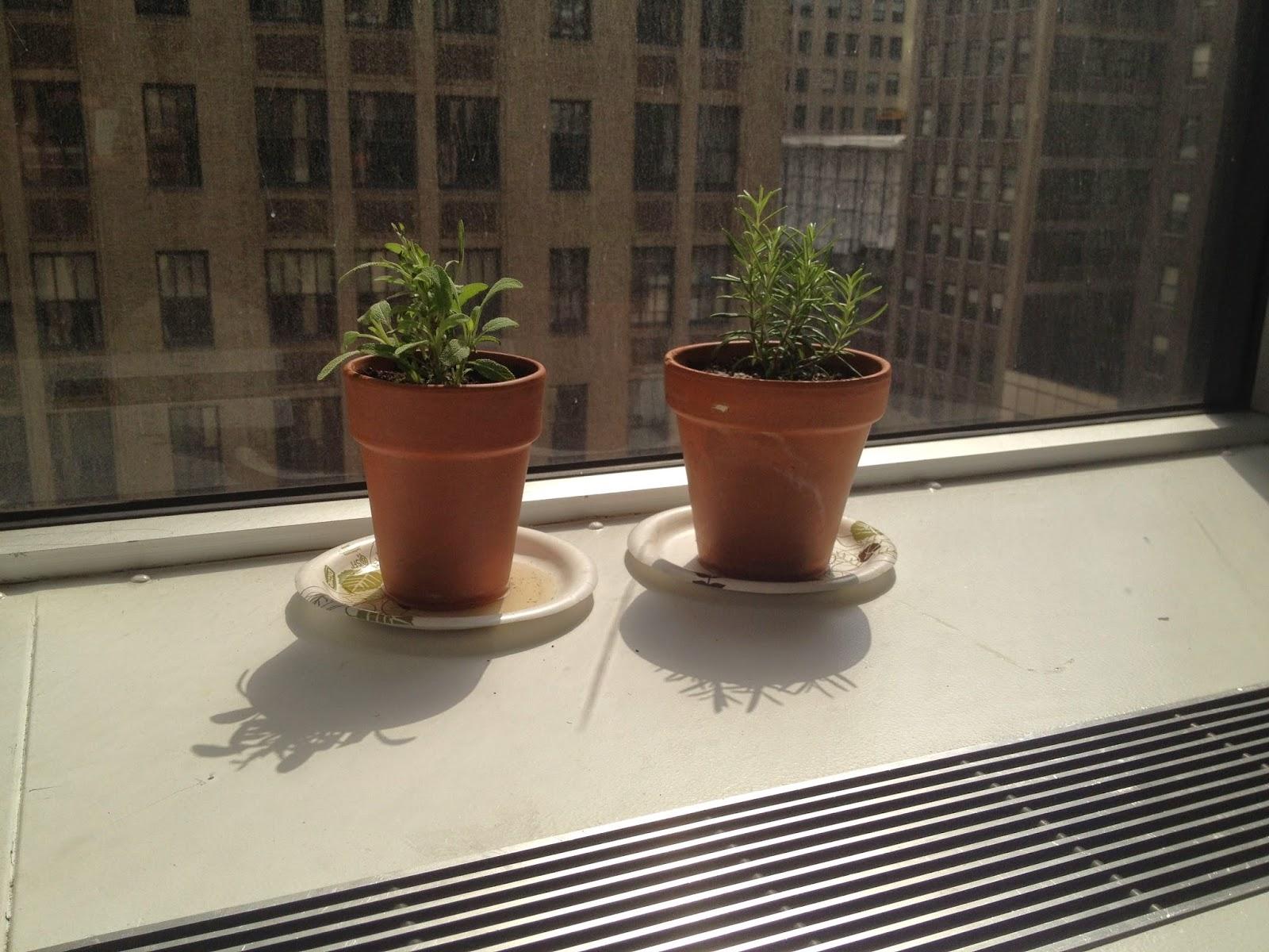 The Aerogarden Ultra dies, Pesto, and Old-school Indoor Gardening ...