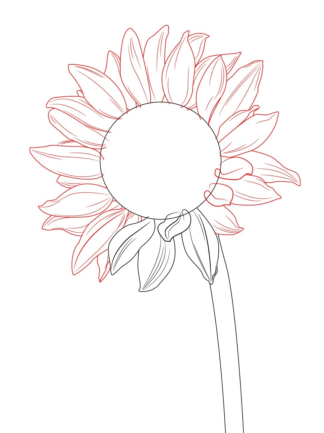 Following The Same Pattern From The Previous Step, Draw The Rest Of The  Petals Of Your Sunflower To Keep The Layered Look, You May Find It Easier  To Draw