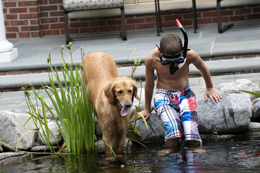 Backyard Water Features For Dogs : AquascapePondsandWaterFeatures156jpg