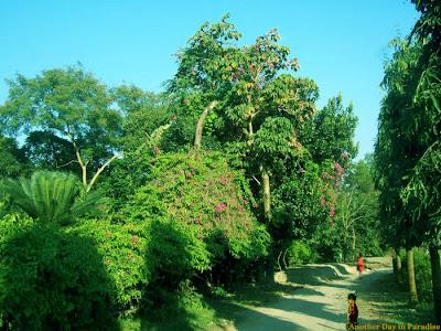 Mirpur Botanical garden