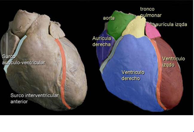 Guardavidas 2012: Anatomía y Fisiología 29/9