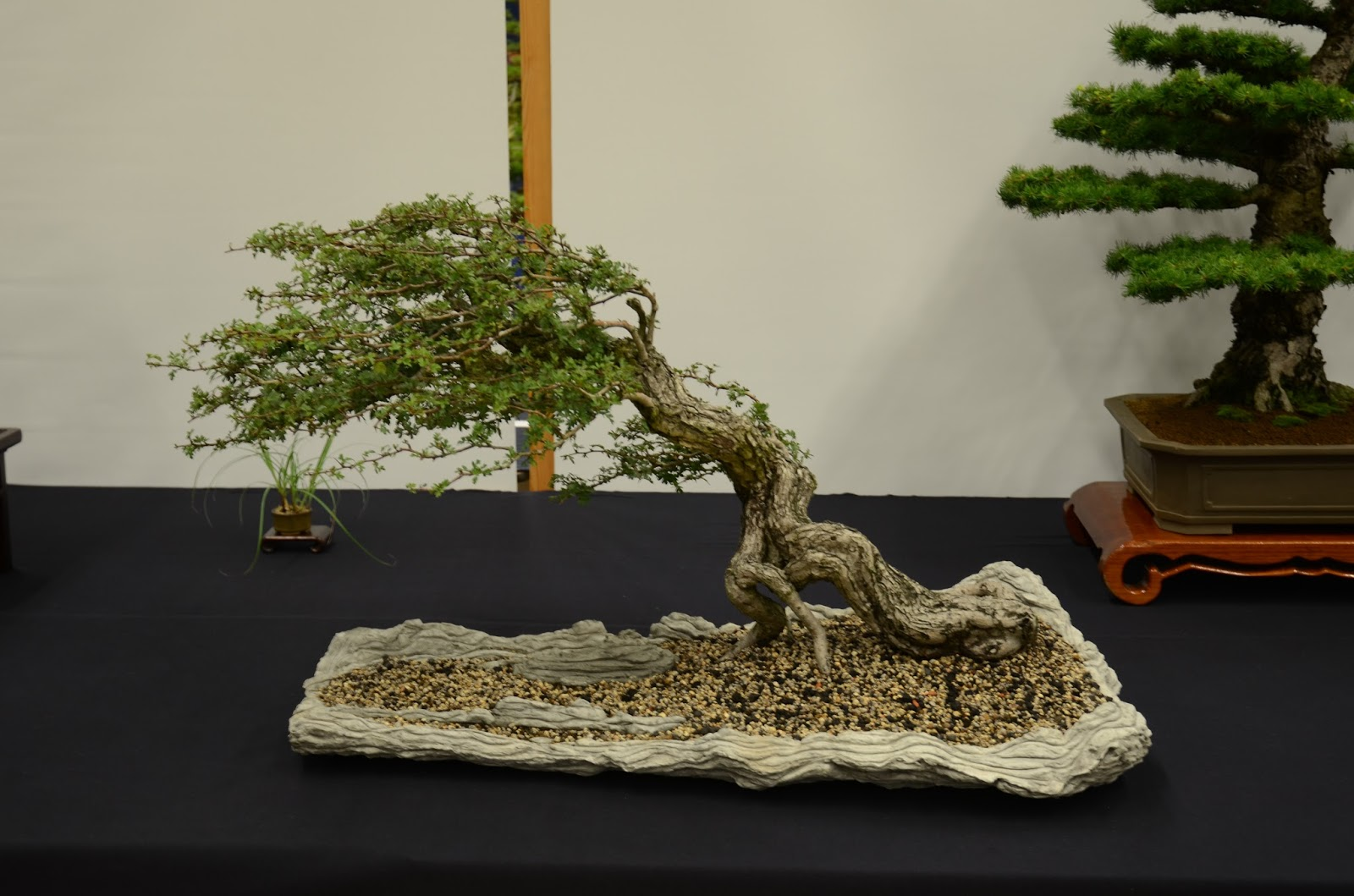 Bonsai Tree 23 Awesome World Inspirations Wiring Wisteria In The