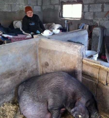 Kejam Anak Biarkan Ibu Tua Tinggal Dalam Kandang Babi