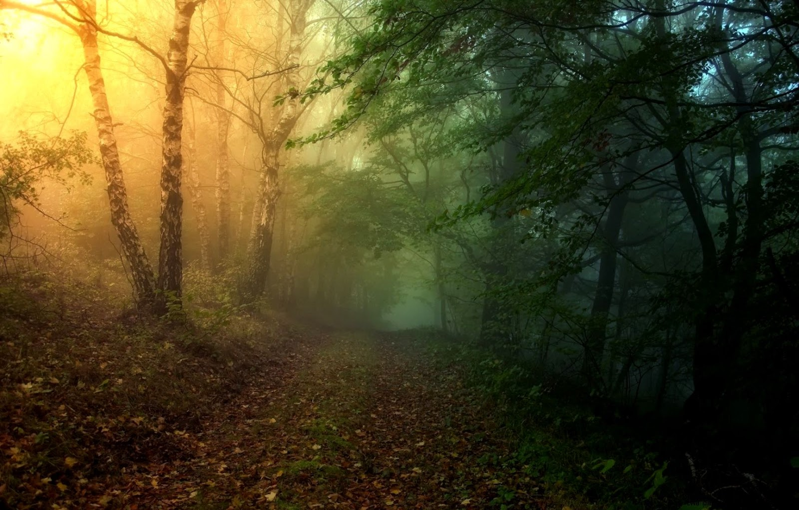 Mysterious and Magical Forest