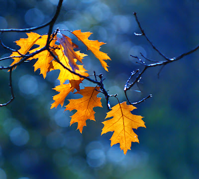 leaf photography ideas