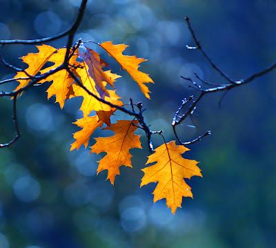 leaf photography ideas