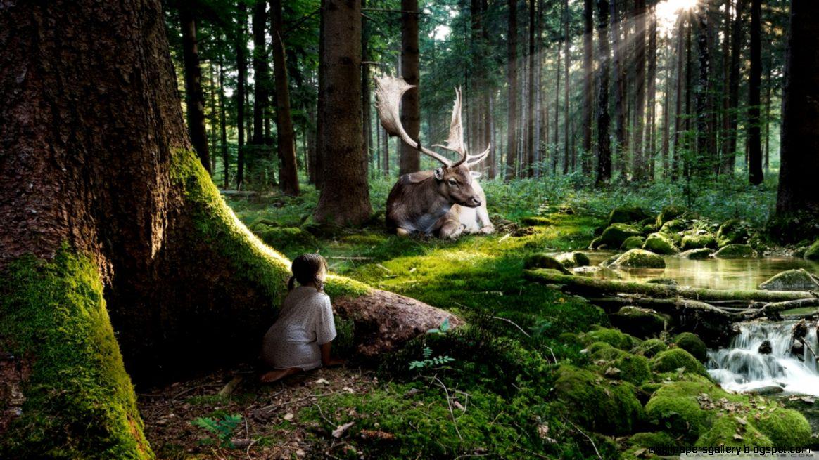 Fairytale Forest HD desktop wallpaper  Widescreen  High