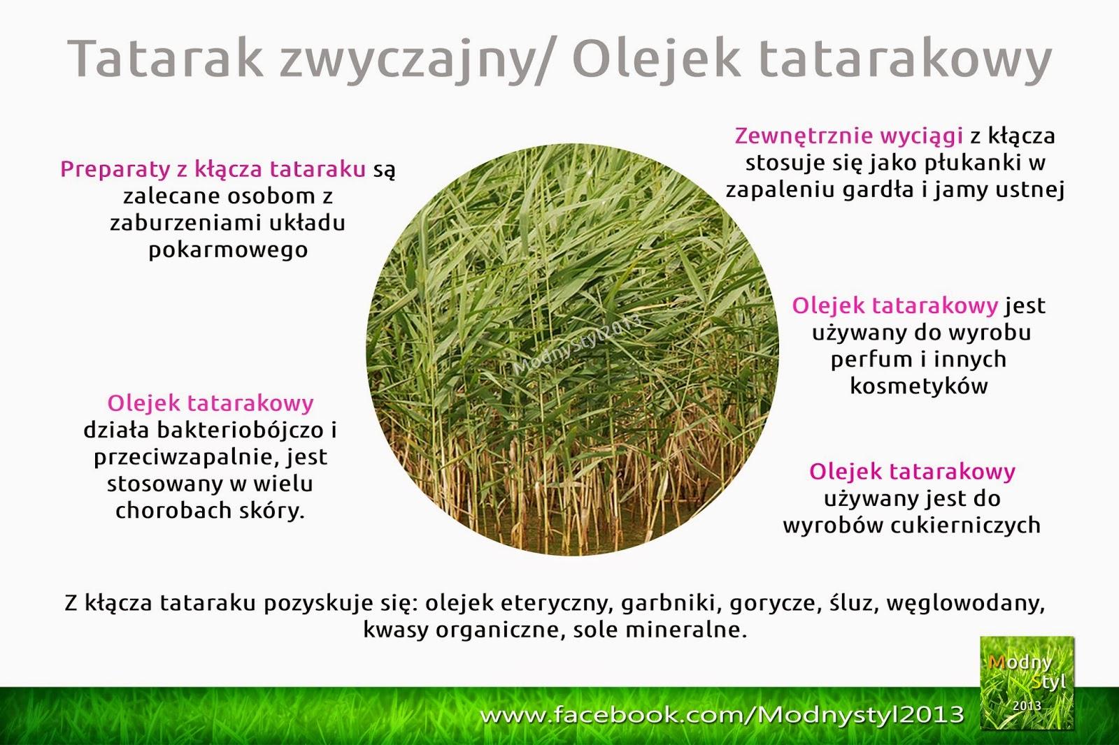 Tatarak / Olejek tatarakowy