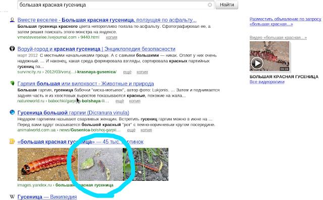 Яндекс картинки большая красная гусеница