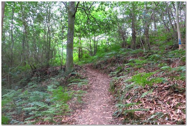 También bosque, continuos cambios de paisaje