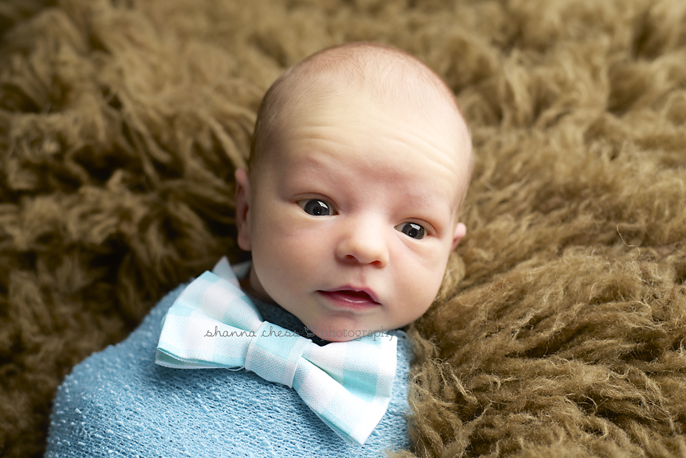 eugene or newborn photography bow tie